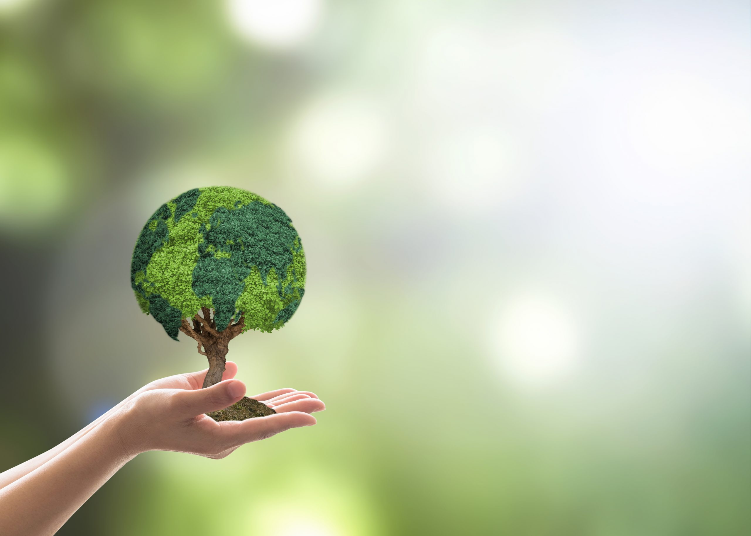 Tree globe growing on volunteer's hand for earth day, sustainable environment protection campaign and natural conservation concept